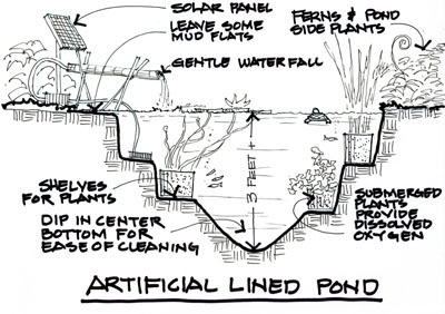 Drawing by John Markowski illustrating how to set up a pond.