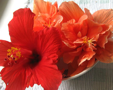 Hibiscus flowers in a bowl.  Photo by Stibolt