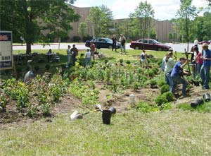 Planting a large rain garden.  Photo by CWP.org