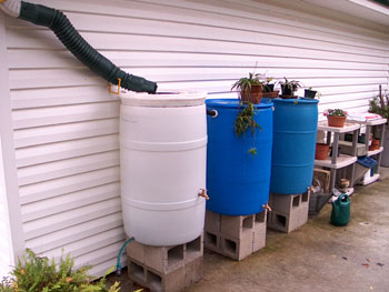A series of three rain barrels next to Ginny's potting bench area.  Photo by Stibolt