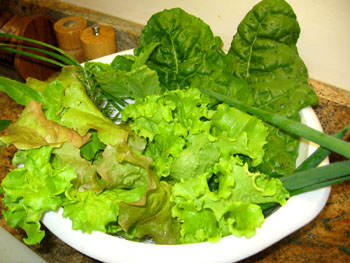 Greens and herbs gathered on New Year's Day!  Photo by Stibolt